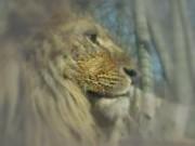 Löwe in uneingeschränkter Sehweise